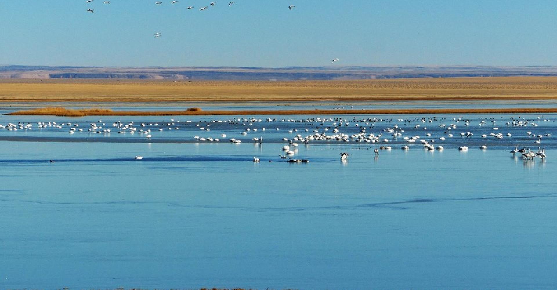 Kholboolj lake