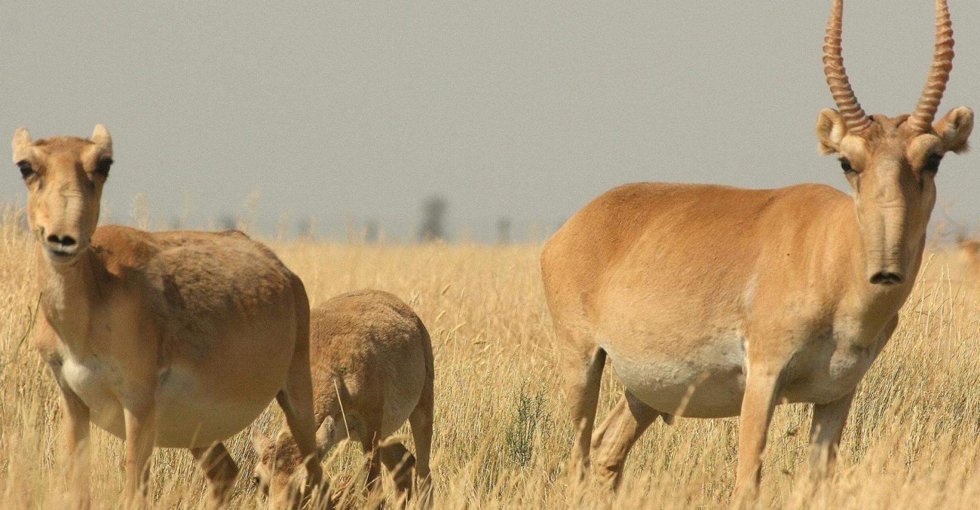 Sharga-Mankhan natural reserve