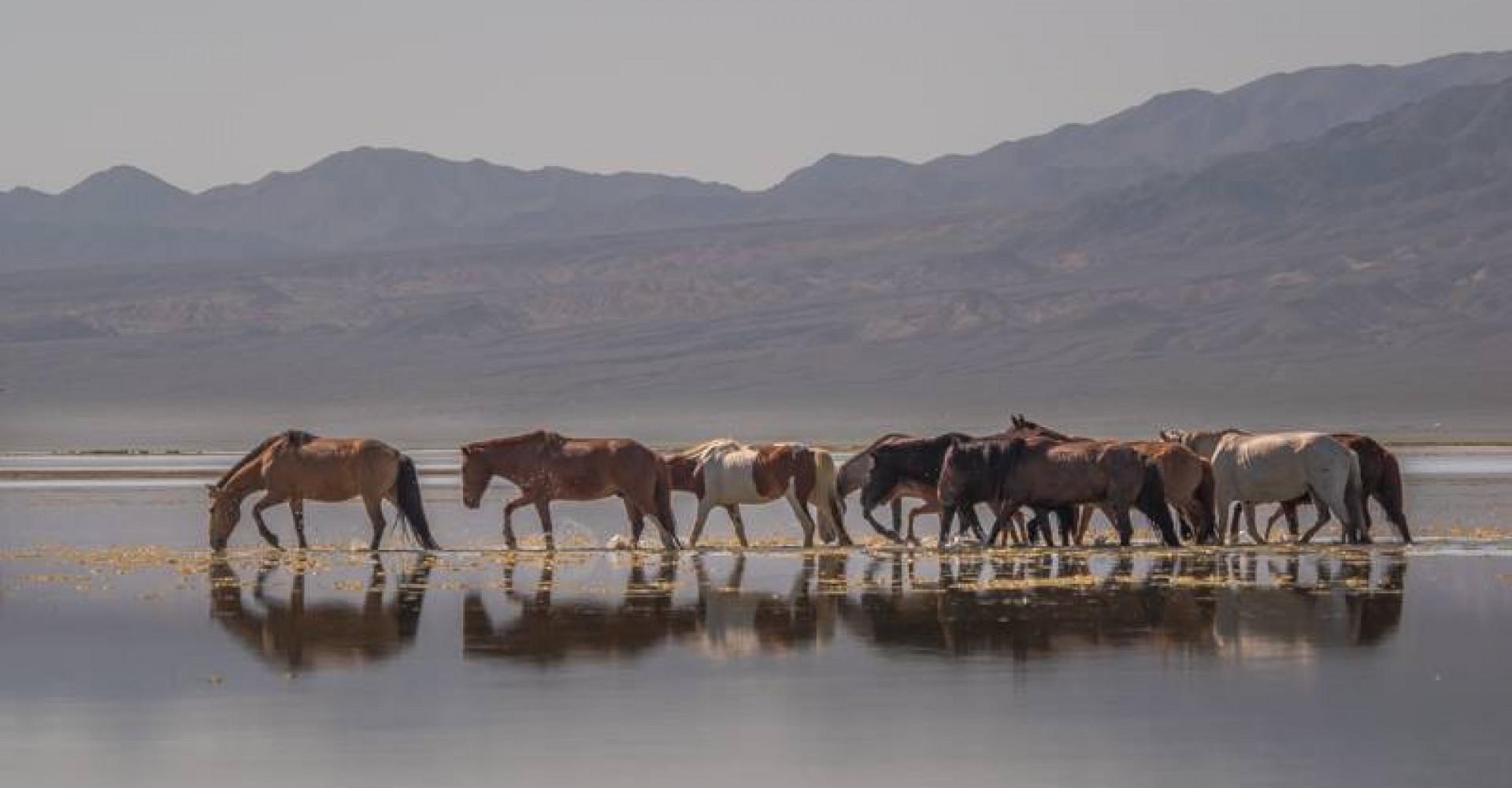 Orog Lake