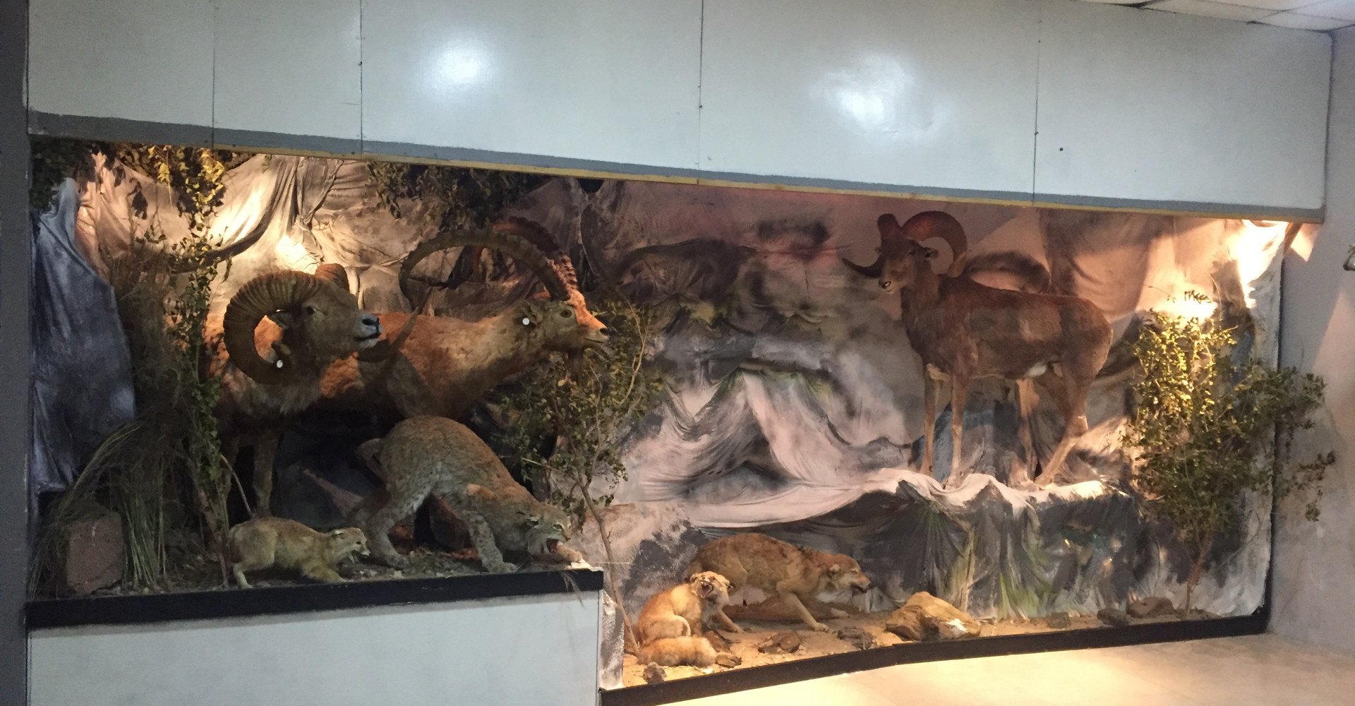 Museum of Dornogobi province