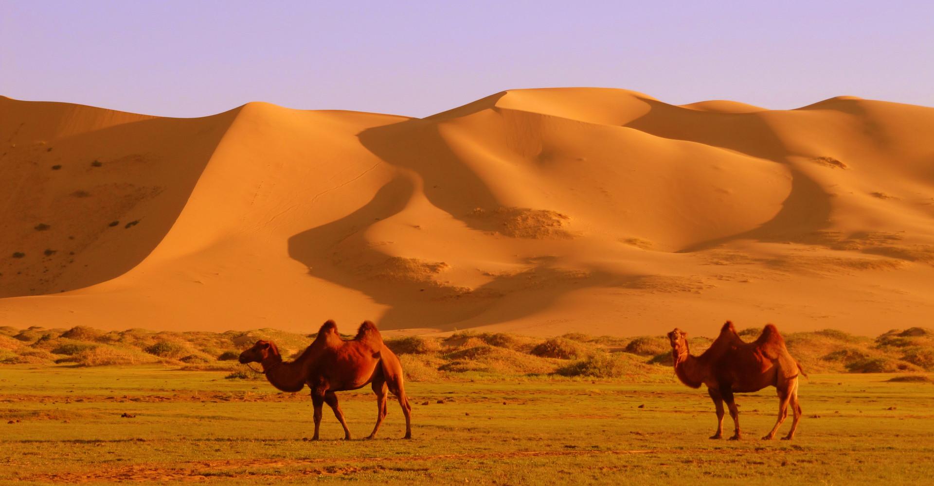 Khongoryn Sand